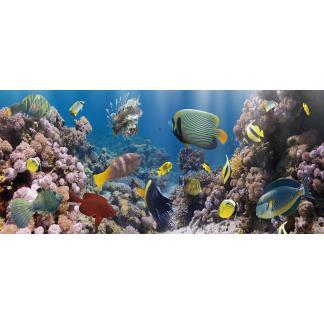Glas schilderij Vissen