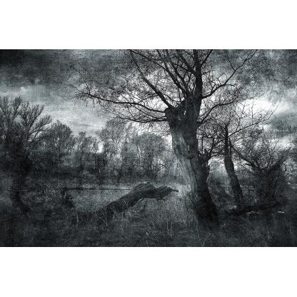 Glas schilderij Zwart-wit bos