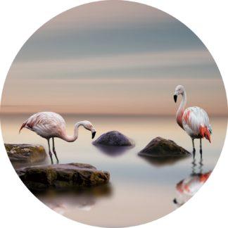 Glasschilderij Flamingo