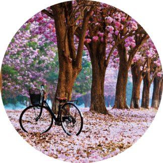 Glasschilderij Kersenbloesem en fiets