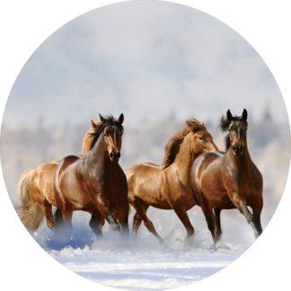 Glasschilderij Paarden in sneeuw